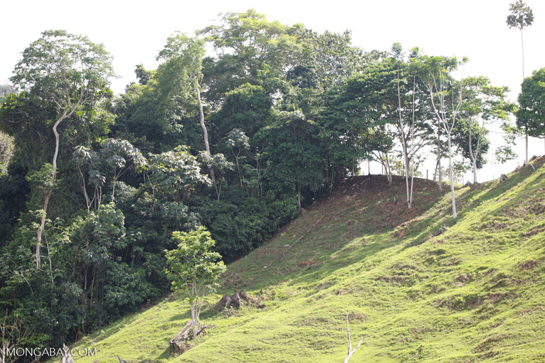 Cattle pasture and rainforest near Peñaloza [colombia_2100]