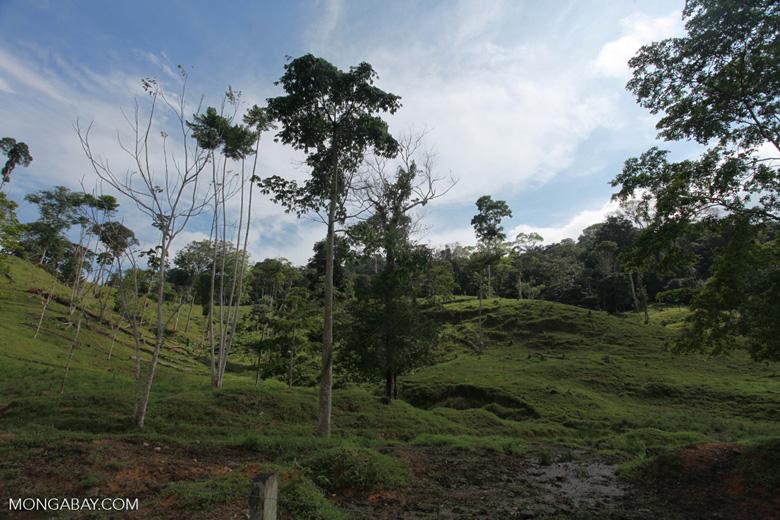 Cattle pasture and rainforest near Peñaloza [colombia_2107]