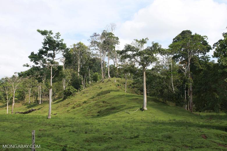 Cattle pasture and rainforest near Peñaloza [colombia_2115]
