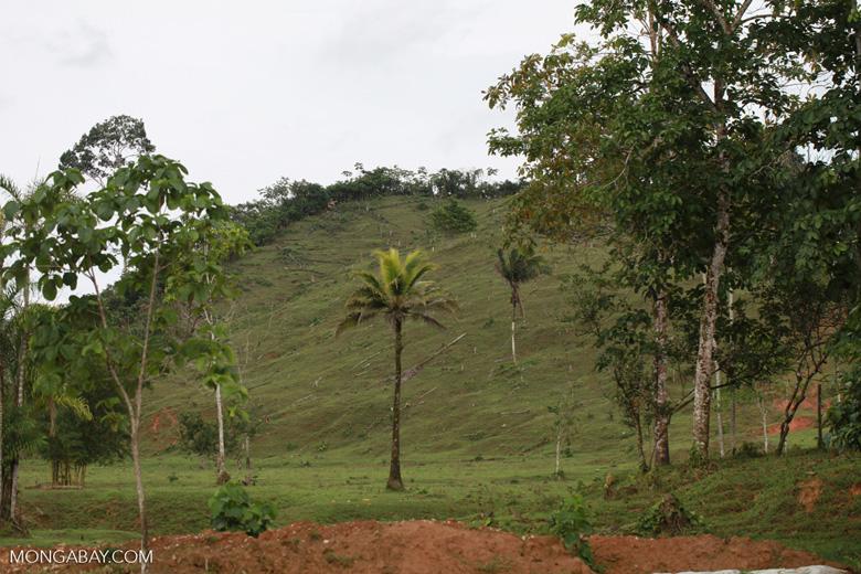 Rainforest cleared for cattle pasture near Peñaloza