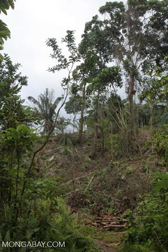 Deforestation in an Embera indigenous forest reserve