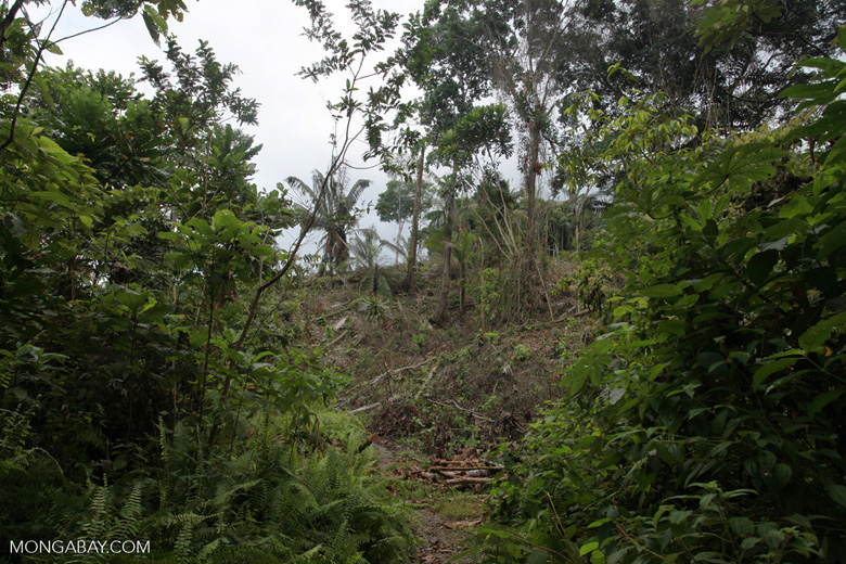 Deforestation by illegal settlers in an Embera indigenous reserve