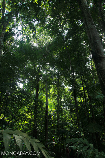 Rain forest of the Colombian Chocó