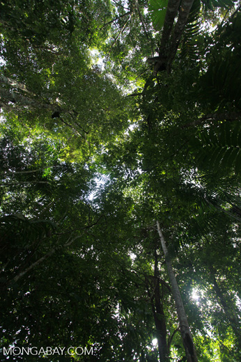 Rainforest canopy of the Colombian Chocó