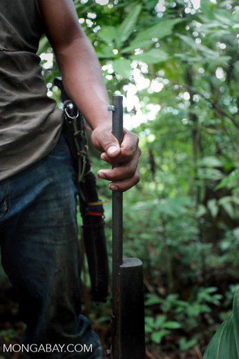 Tropical forest hunter