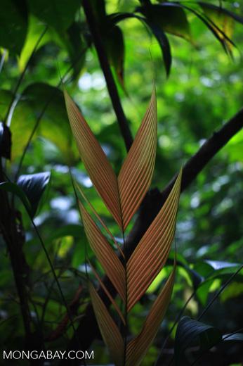 Red rainforest leaves