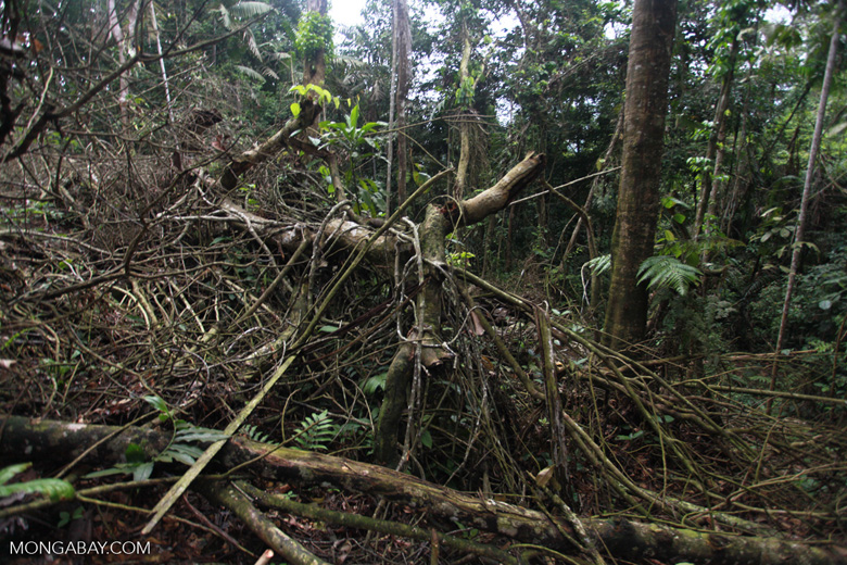 Rainforest clearing