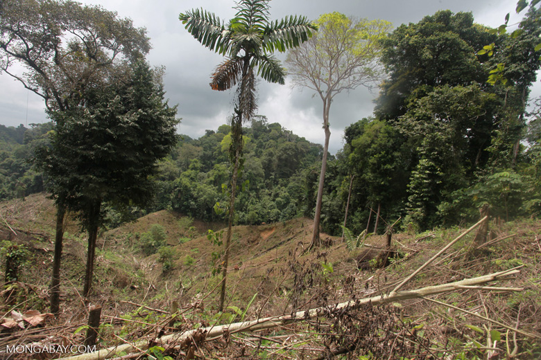 Illegal forest clearing by colonists in an Afro-indigenous reserve [colombia_2354]