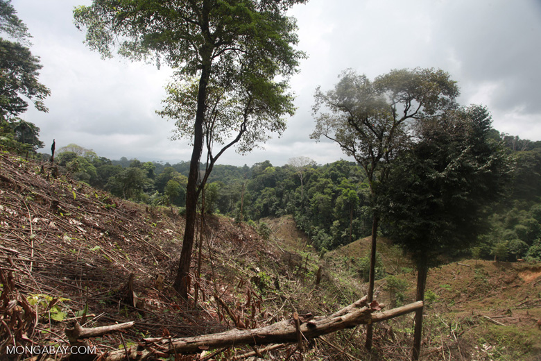 Illegal forest clearing by colonists in an Afro-indigenous reserve [colombia_2358]
