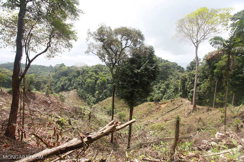 Illegal forest clearing by colonists in an Afro-indigenous reserve [colombia_2360]