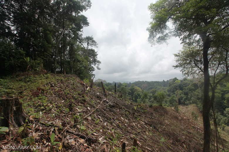 Illegal forest clearing by colonists in an Afro-indigenous reserve [colombia_2361]
