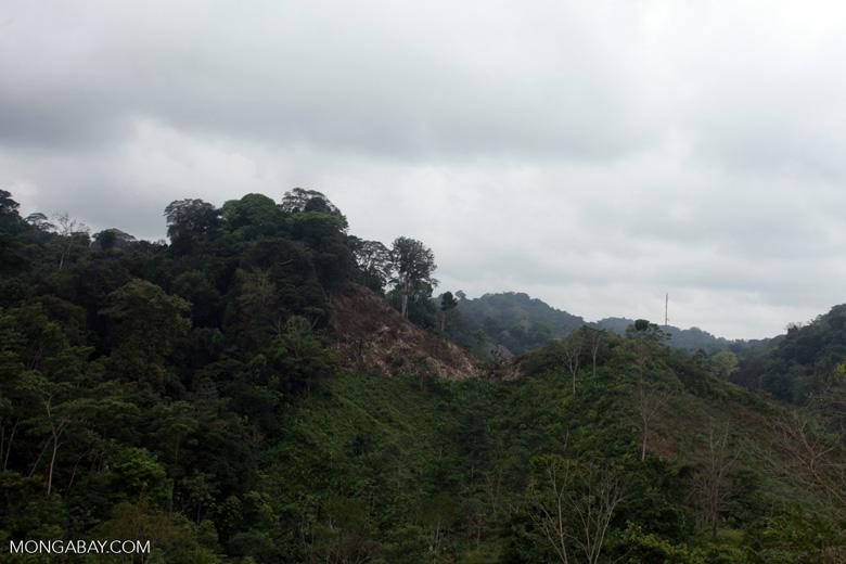 Deforestation for cattle pasture near Chugandi [colombia_2367]