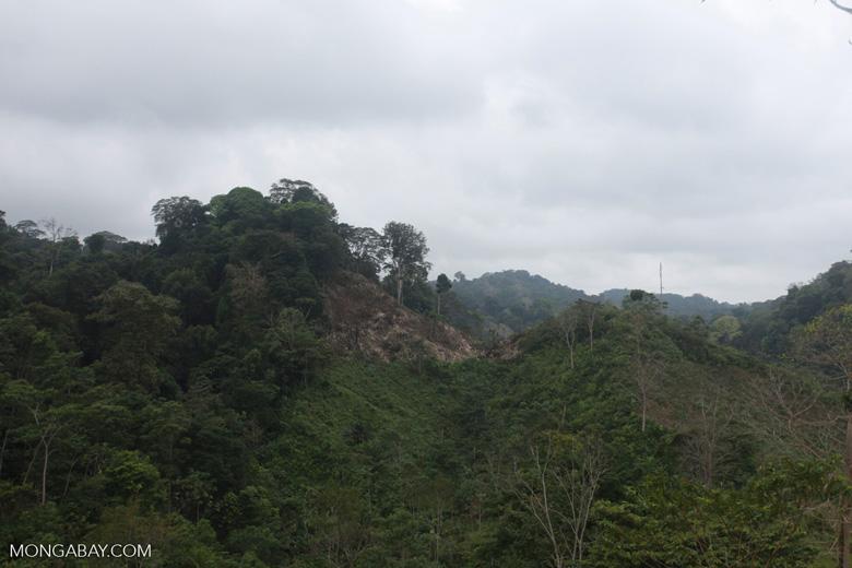 Deforestation for cattle pasture near Chugandi [colombia_2368]