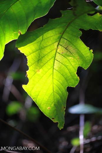 Rainforest shrub lit up by sunlight