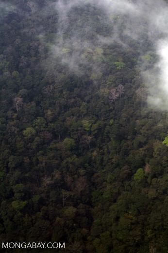 Coastal rainforest in Colombia's Darien [colombia_2886]