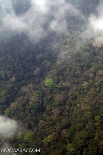 Coastal rainforest in Colombia's Darien [colombia_2891]