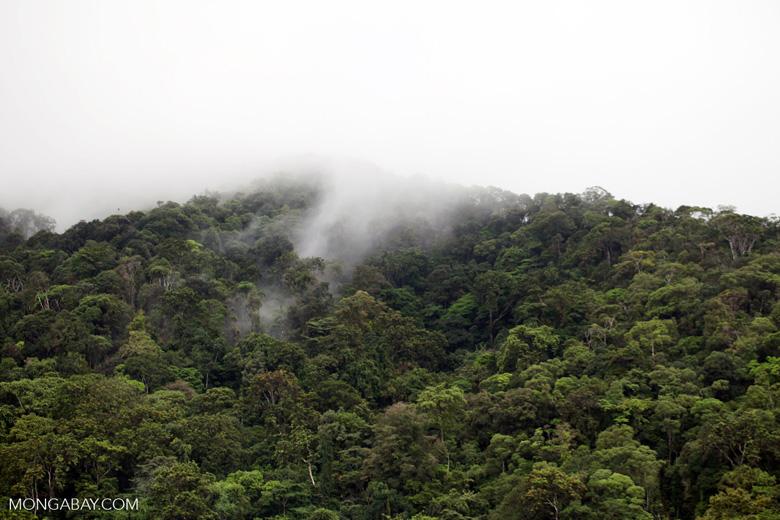 Rainforest of Isla Gorgona [colombia_3013]