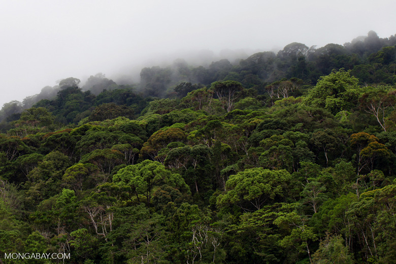 Intact rainforest in Isla Gorgona, Colombia