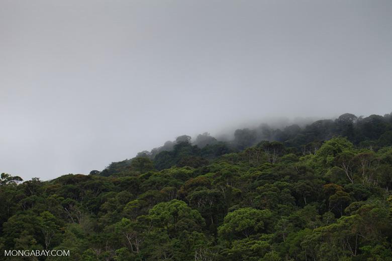 Rain forest of Gorgona island