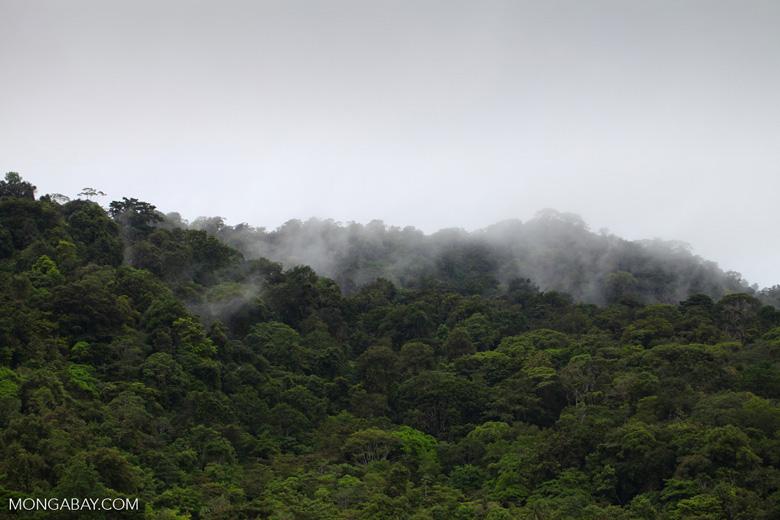 Rainforest of Isla Gorgona [colombia_3034]