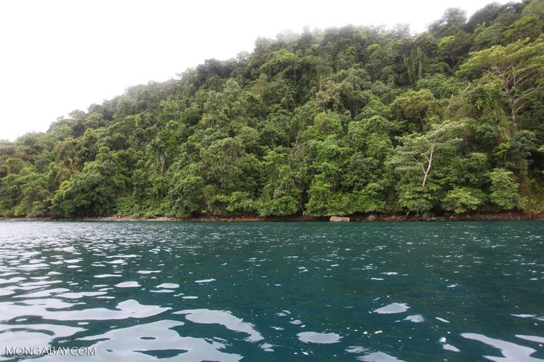 Turquoise sea and rain forest of Isla Gorgona [colombia_3055]