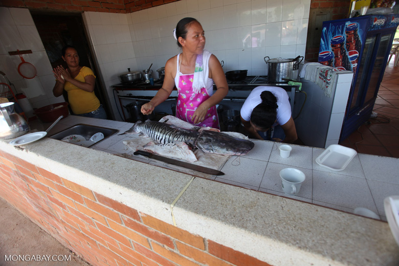 Woman cutting the head off a catfish [colombia_3178]