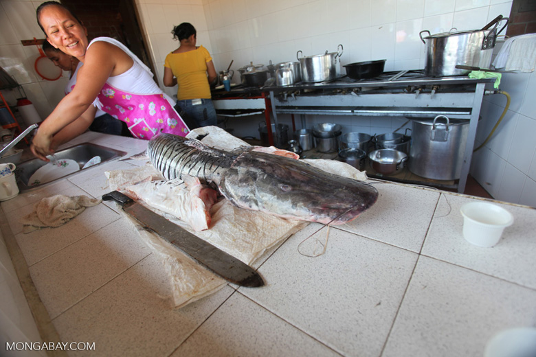 Woman cutting the head off a catfish [colombia_3180]