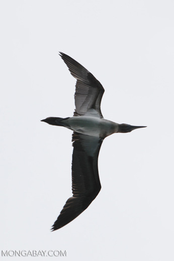 Bird [colombia_4173]