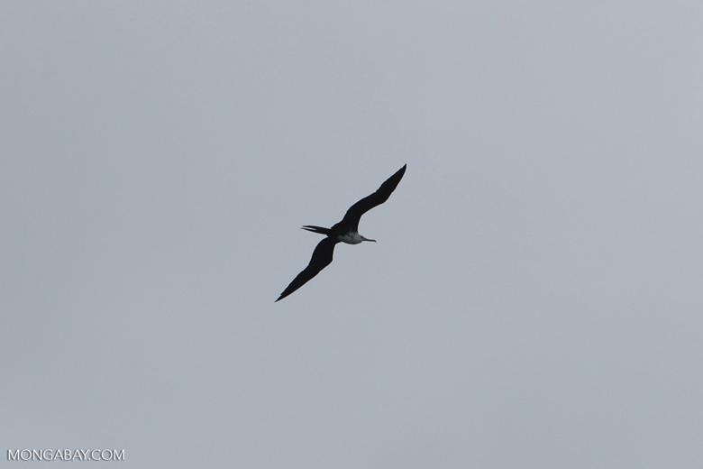 Bird [colombia_4189]
