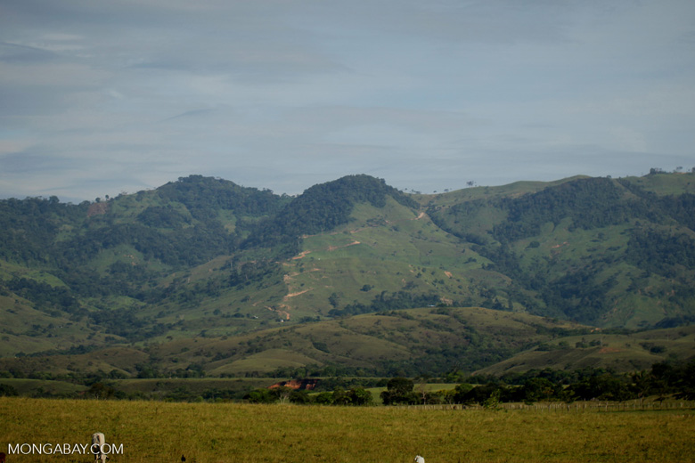 Cattle pasture in Colombia