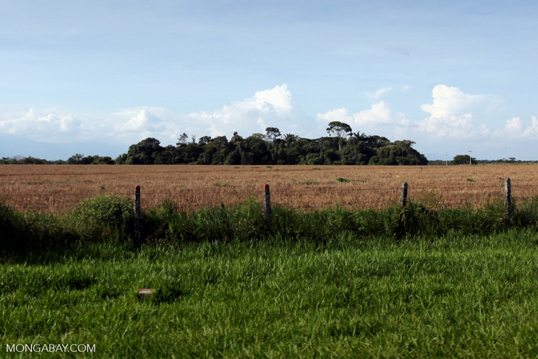 Forest fragment amid cattle pasture in Colombia