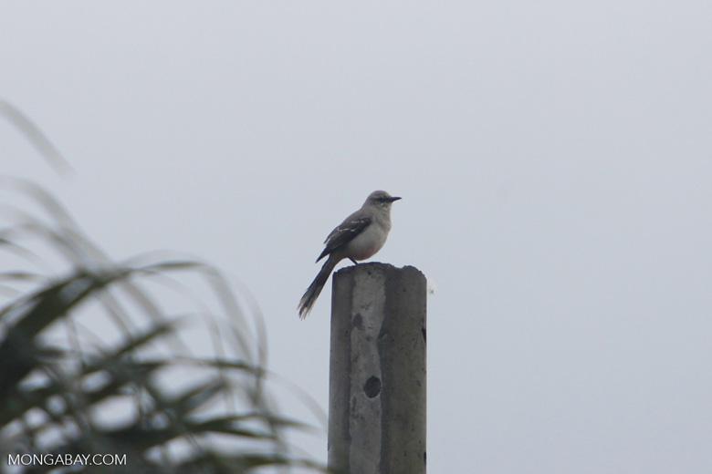 Bird [colombia_4693]