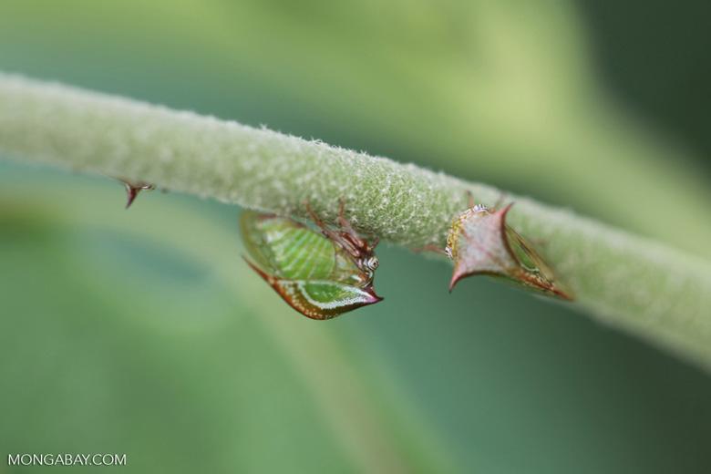 True bug [colombia_4858]