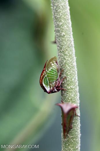 True bug [colombia_4859]