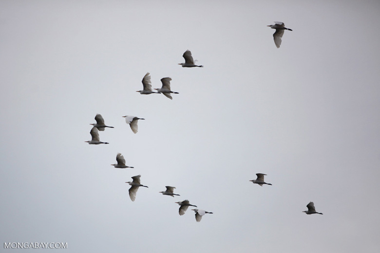 Birds in flight [colombia_5126]