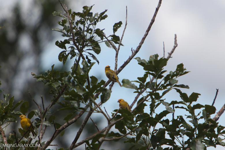 Birds [colombia_5195]