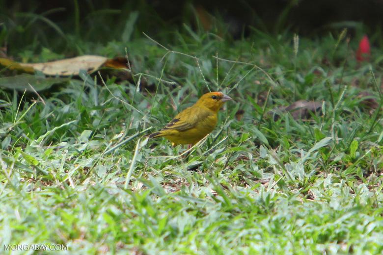 Bird [colombia_5354]