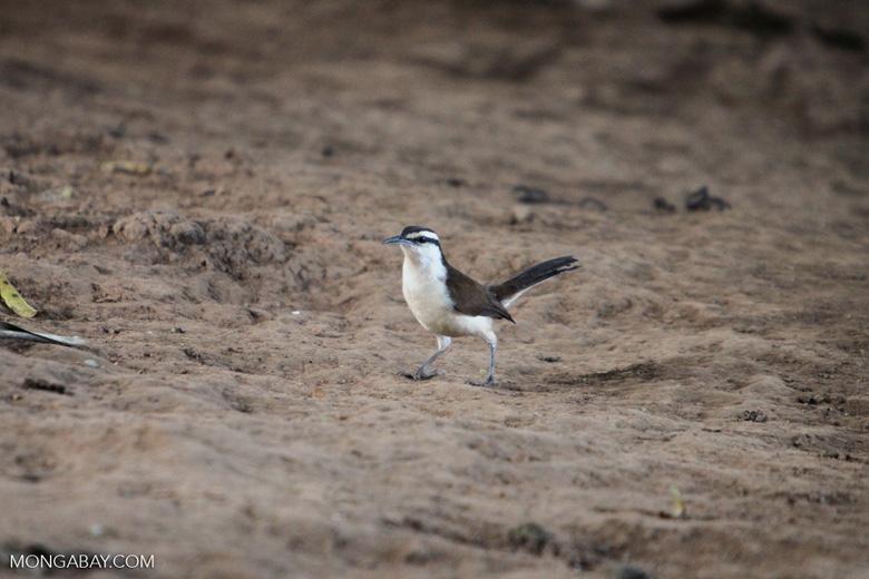 Bird [colombia_5572]