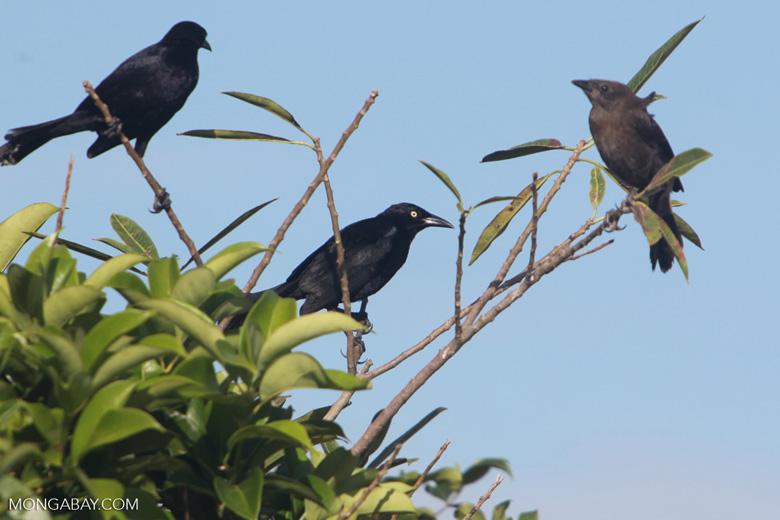 Bird [colombia_5641]