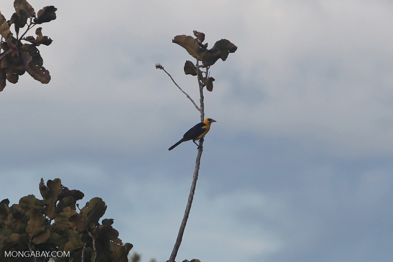 Bird [colombia_5698]
