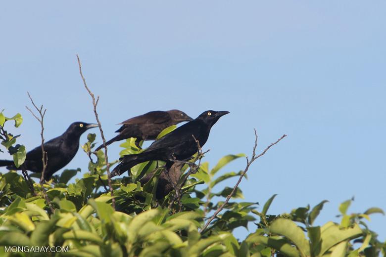 Bird [colombia_5700]