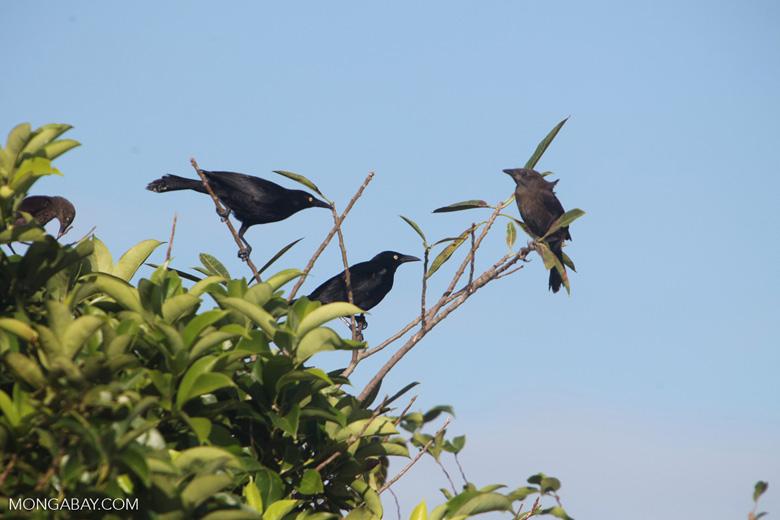 Bird [colombia_5701]