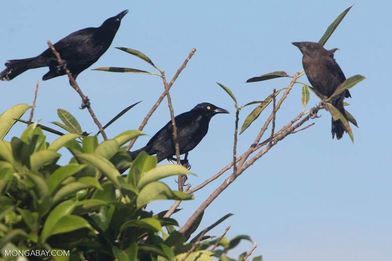 Bird [colombia_5756]