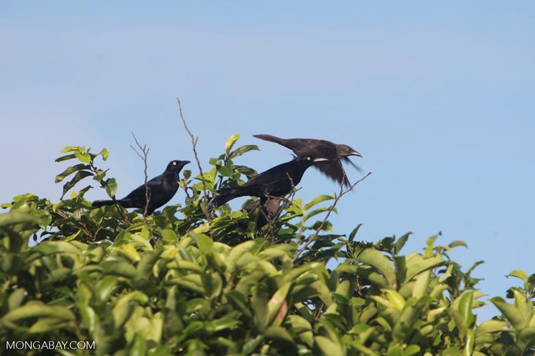 Bird [colombia_5775]
