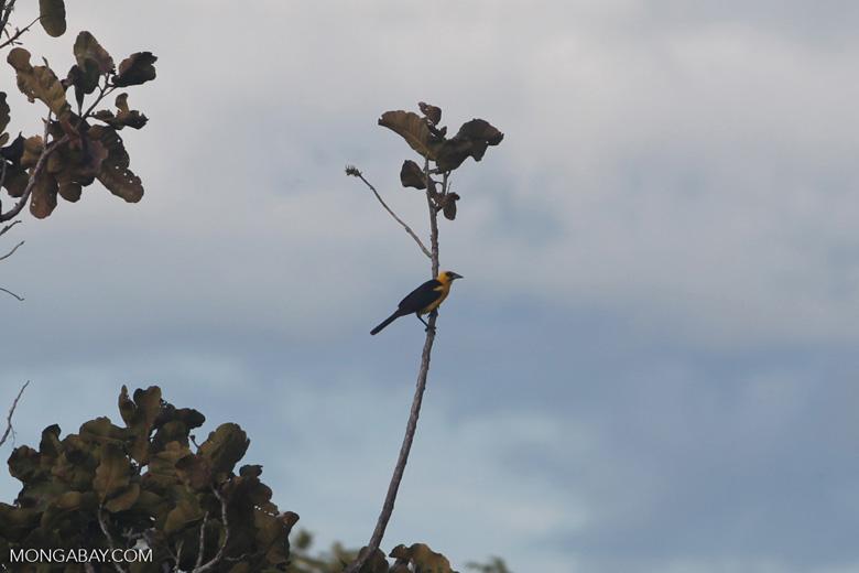 Bird [colombia_5785]