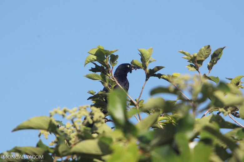 Bird [colombia_5813]