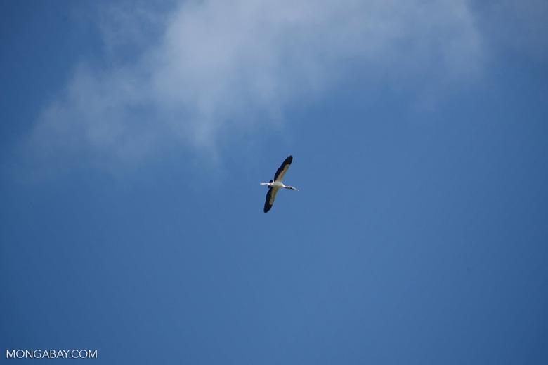 Bird [colombia_6021]