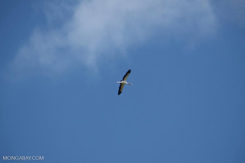 Bird [colombia_6037]