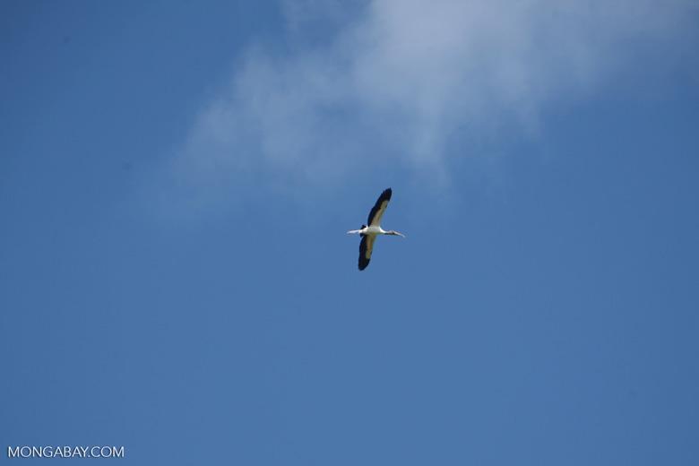 Bird [colombia_6060]