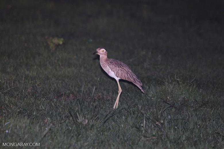 Bird [colombia_6128]